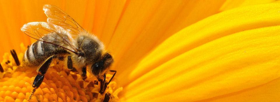 Imkerij Honing te Rijk